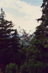 Bäume_Blätter