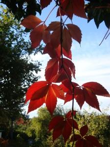 Herbst ohne Haus
