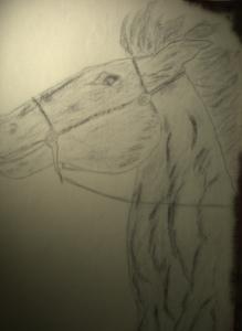 Pferdekopf Kopie